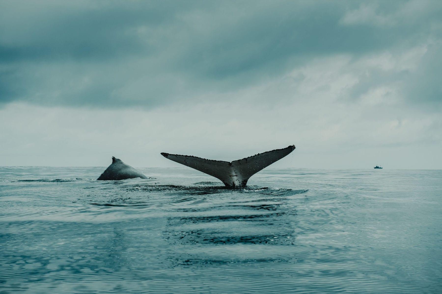 An Interview with Sea Shepherd's Mark Muschamp